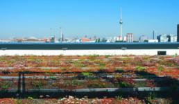 STrauma Landschaftsarchitektur Berlin landscape architects Mercedes Benz Berlin Dachbegrünung