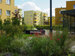 STrauma Landschaftsarchitektur Berlin landscape architects Kormoranweg Berlin wohnen im Grünen Buchenhecken
