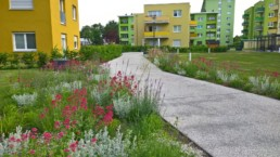 STrauma Landschaftsarchitektur Berlin landscape architects Kormoranweg Berlin Blumen und Wiese