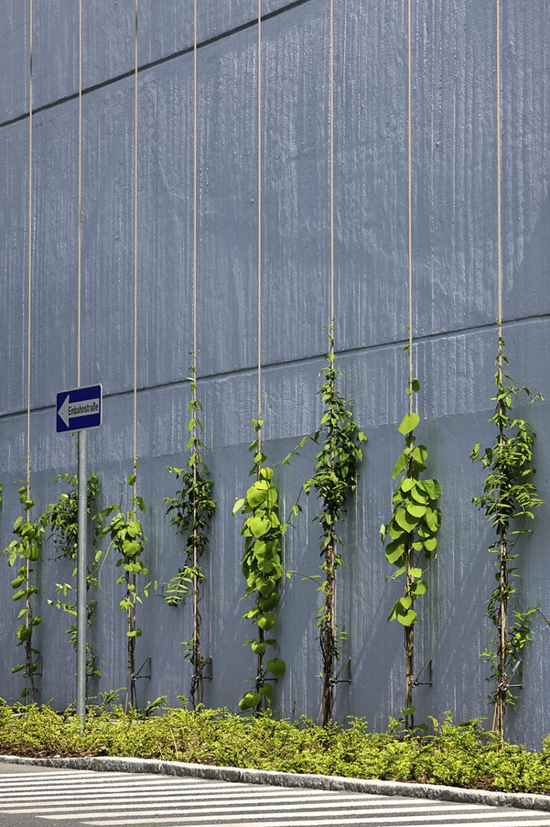 STrauma Landschaftsarchitektur Berlin landscape architects Bayer Pharma Ranken kletterpflanzen Wandbegrünung