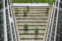 STrauma Landschaftsarchitektur Berlin landscape architects E Plus Düsseldorf Elemente Stein und Baum